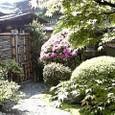 風薫る庭にツツジが咲きました